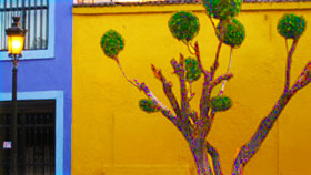 Tree on yellow wall